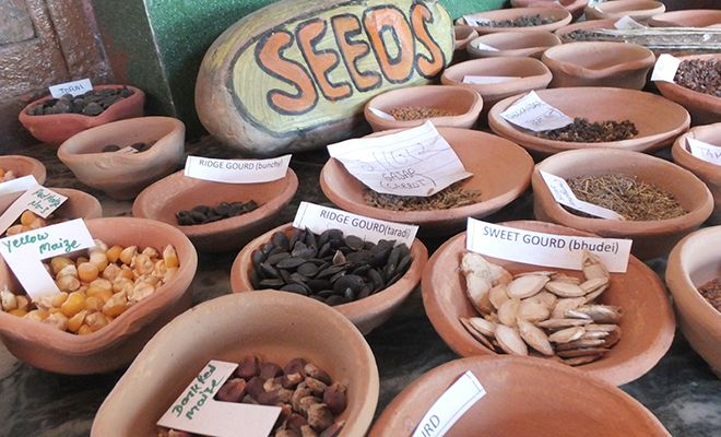 seed-vandana-shiva_03